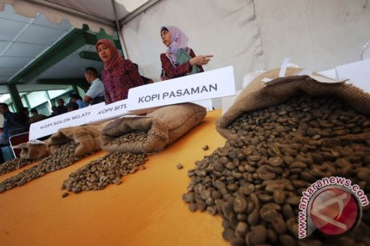 Ribuan gelas kopi kawa daun siap pecahkan rekor MURI