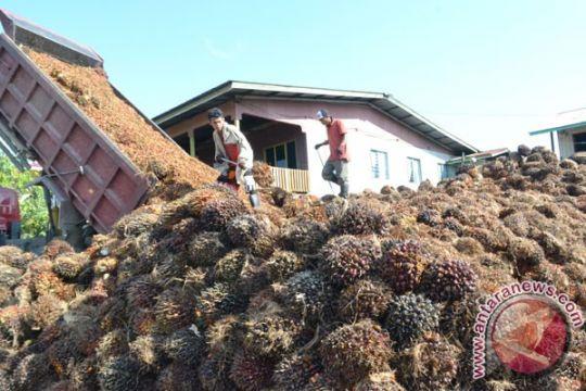 Hilirisasi kelapa sawit perbaiki harga komoditas