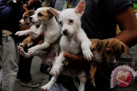 Petugas kesehatan Jepang temukan 164 anjing berjubel di rumah sempit
