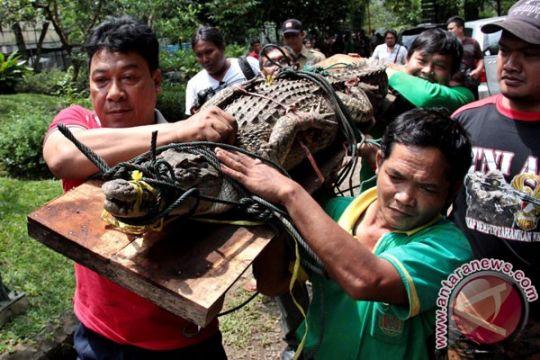 Warga eks Timtim Kupang tewas diterkam buaya