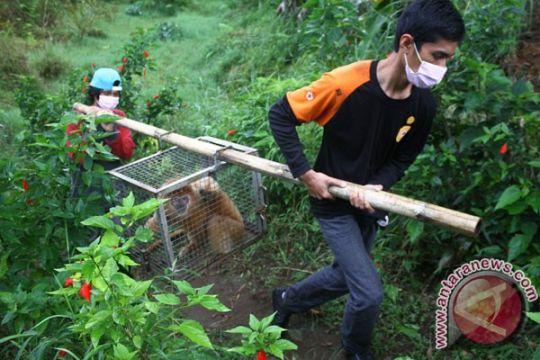 Belasan satwa dilindungi dilepasliarkan di Siantang