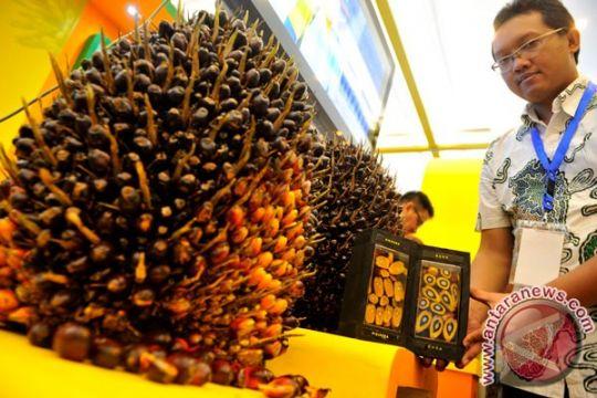 RSPO yakin konsumen Indonesia beralih sawit berkelanjutan