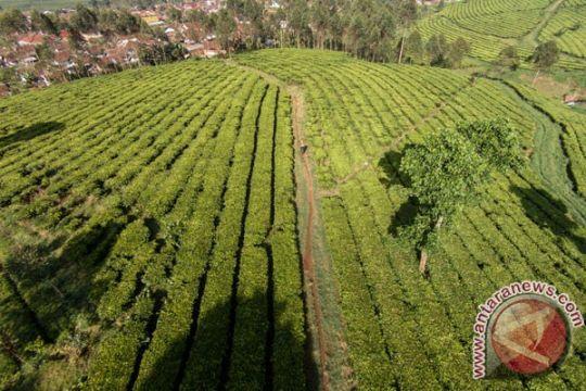 Kota Bandung tanam pohon langka untuk penghijauan
