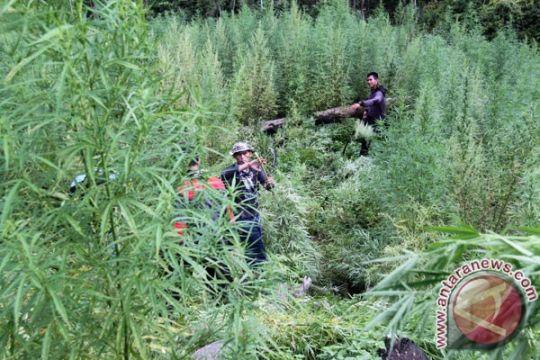 Jumlah kasus narkoba di Aceh meningkat