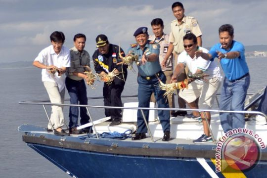Karantina Ikan Batam lepas 13.000 benih lobster