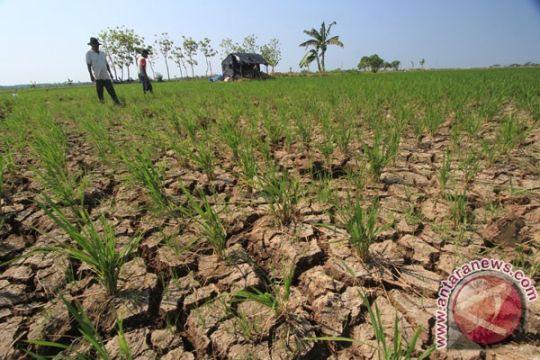 Bupati Bogor Nurhayati bangun enam waduk antikekeringan