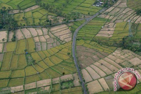 26.153 hektare sawah di Cilacap dan Ciamis terancam kekeringan
