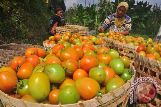 Harga tomat di Sorong melonjak