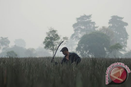 BMKG deteksi lima titik panas di Aceh Barat