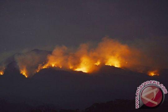 5 hektare pinus terbakar di Aceh Tengah