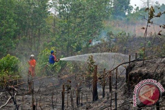 Titik panas Sumatera turun drastis
