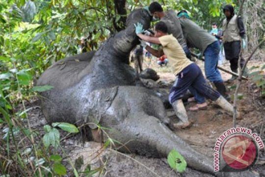 Ini petisi penolakan jual-beli gading gajah secara online
