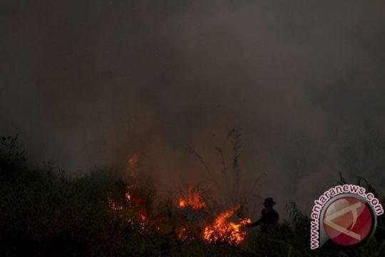 Tanaman edelweis di Gunung Papandayan terbakar