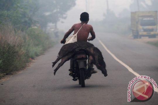 Kualitas udara Batam makin buruk