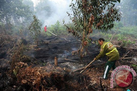 Hutan di Mamuju terbakar mengancam pemukiman