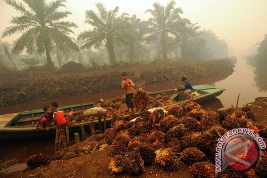 Harga CPO di Jambi anjlok, di bawah Rp6.500 per kilogram