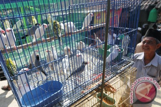 Seorang ibu bawa puluhan burung ilegal diamankan polisi