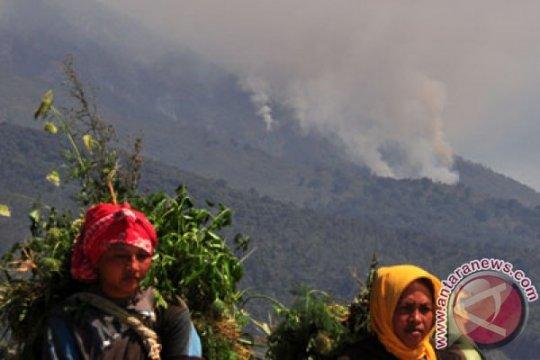 TNGM : kebakaran hutan Merapi ada unsur kesengajaan