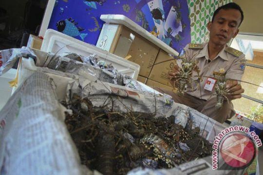 SAR Gunung Kidul selamatkan nelayan tenggelam saat mencari lobster