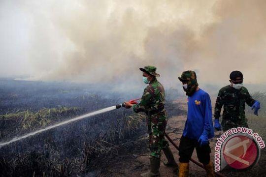 Kebakaran hutan di Tolitoli berhasil dipadamkan