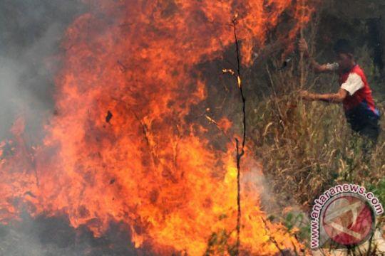 Pemerintah keluarkan dana penanggulangan bencana asap Rp500 miliar