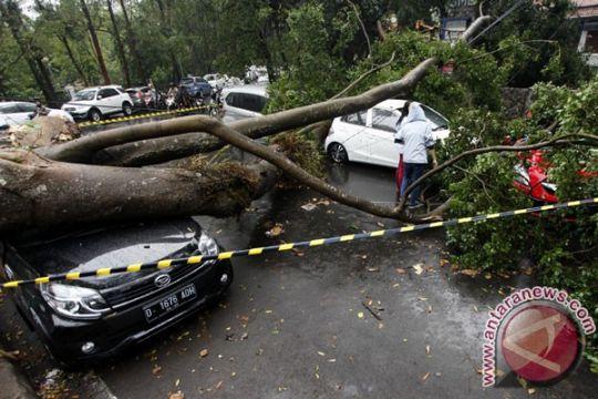 Pohon tumbang akibat puting beliung timpa mobil DPRD
