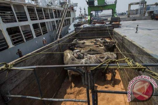 Jokowi dan Gubernur DKI bicara impor sapi