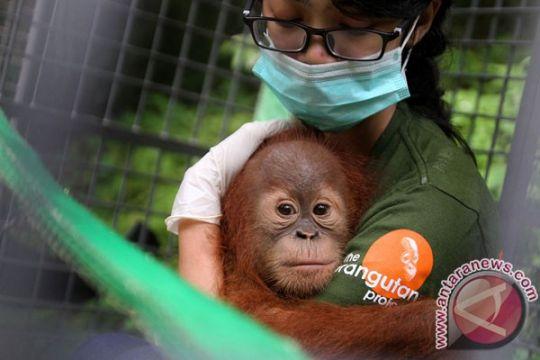 Kaus #savedodo untuk selamatkan orangutan