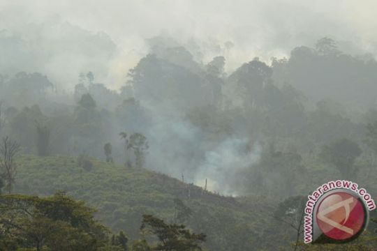 168 hektare lahan di Jambi terbakar