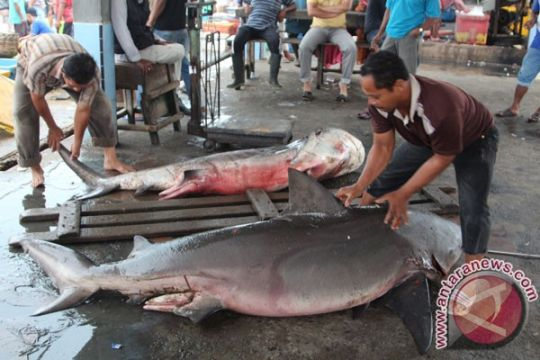 Mahasiswa Undip Semarang ajak masyarakat lindungi hiu