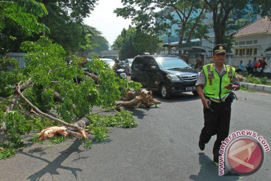Sejumlah pohon tumbang akibat hujan Jakarta