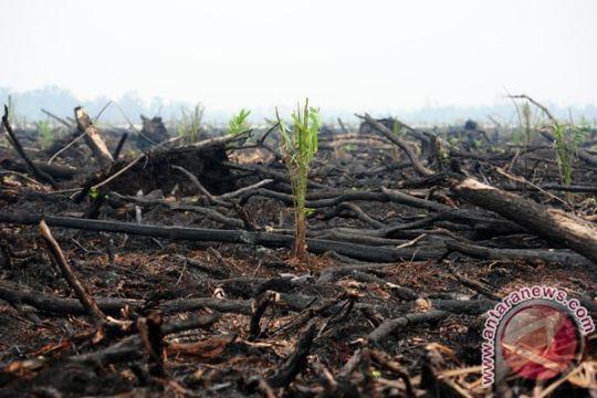 Palangka Raya tetapkan status siaga darurat bencana