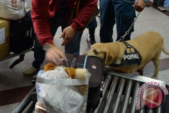 Presiden Jokowi minta anjing untuk pasukan K-9 diperbanyak