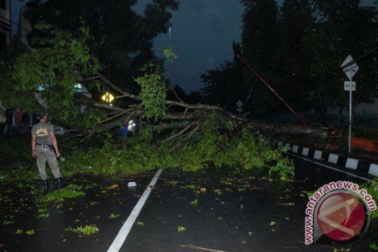 Pohon tumbang timpa pengendara motor di Bogor