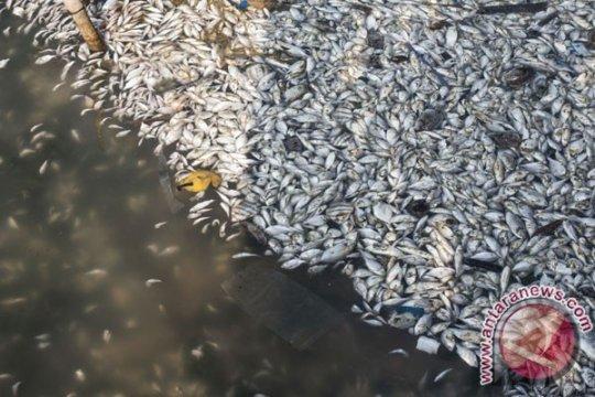 Nelayan Bengkulu jaring ribuan ikan mati