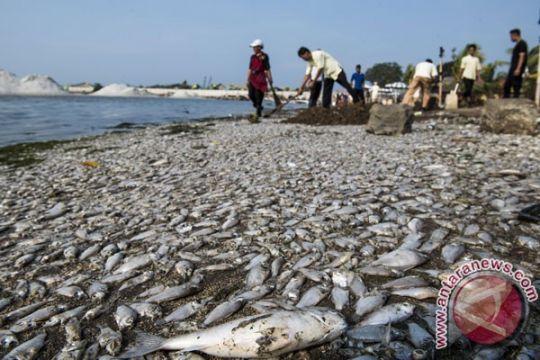 Ditpolair Polda Metro selidiki ribuan ikan mati