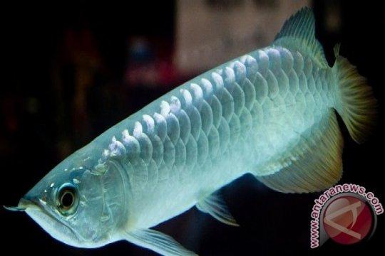 KKP resmi ambil alih otoritas pengelola CITES ikan dari KLHK