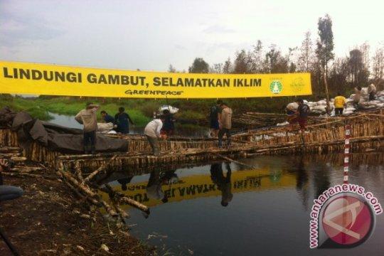 50.000 pohon ditargetkan ditanam Borneo Nature Foundation di lahan gambut