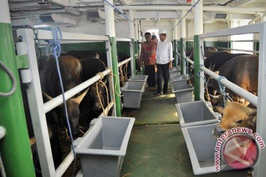 Ratusan hewan ternak terpanggang di KLM Wahyu Ilahi
