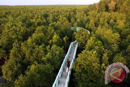 Seribu mangrove ditanam di Pantai Panjang Bengkulu