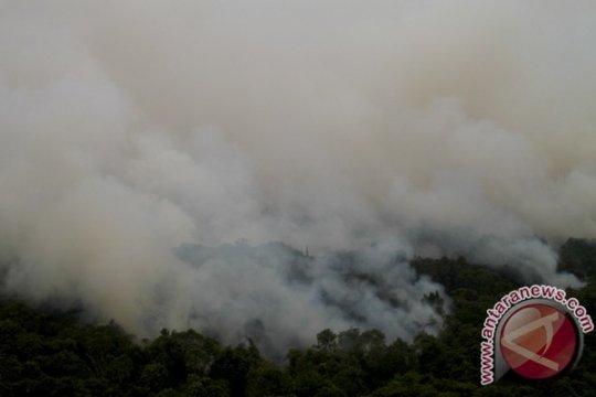 130 hektare kawasan hutan di Bangka Tengah rusak terbakar