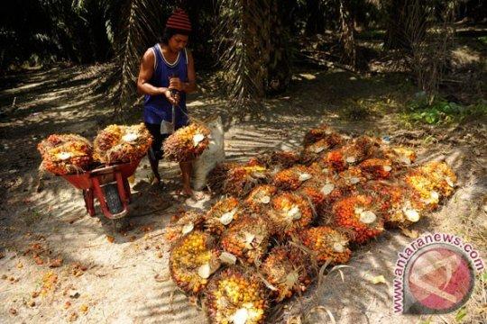 WWF Indonesia nilai perlu komitmen politik penerapan sawit berkelanjutan