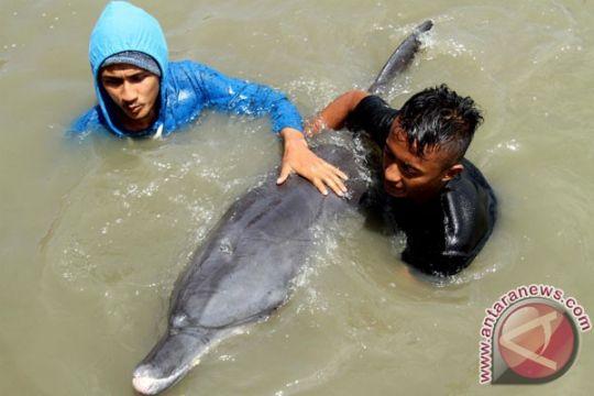 Lumba-lumba terdampar di Pantai Kemiren, Cilacap