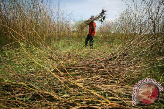 BMKG: DIY akan alami kemarau basah