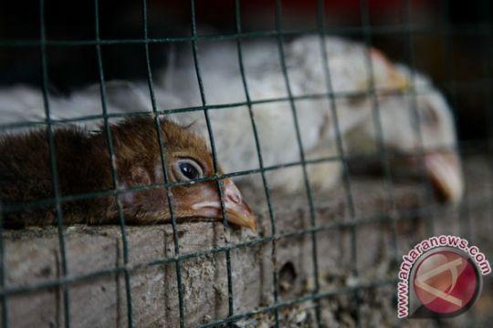 Ribuan unggas di Sukabumi mati mendadak
