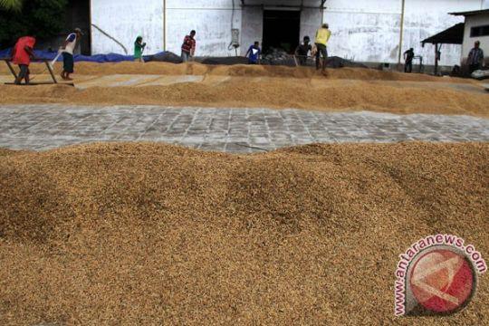 Harga GKP petani Kalsel turun 3,03 persen