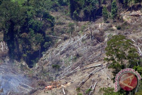 Perambahan hutan di TNLL Palu makin berkurang