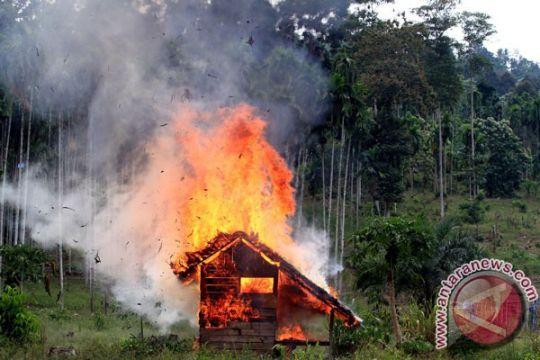 9,2 hektare ladang ganja di Aceh Besar dimusnahkan