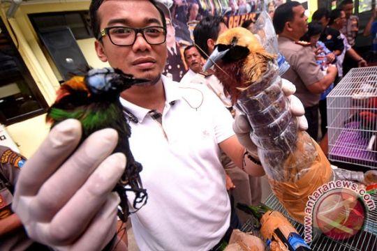 Burung Cenderawasih dilarang dijadikan suvenir