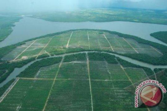 1.530 hektare lahan sawit rakyat Kotawaringin Barat bakal diremajakan